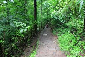 A walk towards Athirapally Water Falls, Kerala