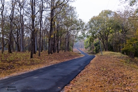 Nagarhole forest roads - Travel in India